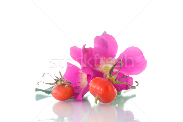 fruits and flowers of wild rose Stock photo © Peredniankina