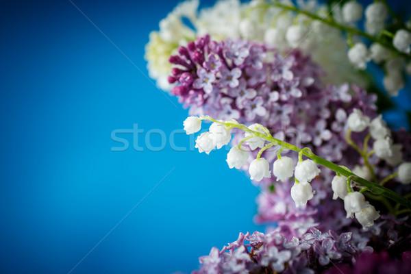Virágcsokor gyönyörű lila orgona kék természet Stock fotó © Peredniankina