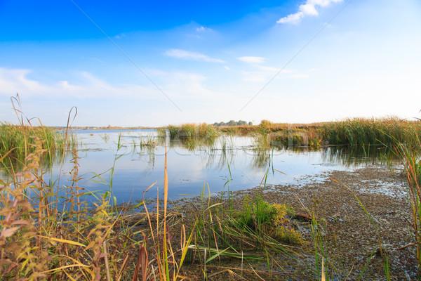beautiful large lake with reeds Stock photo © Peredniankina