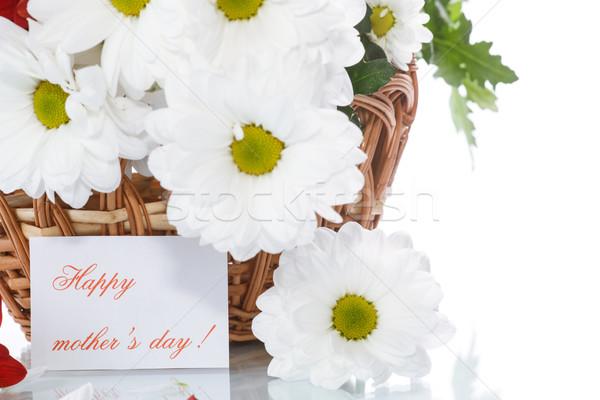 Foto stock: Blanco · crisantemo · cesta · flores · belleza · verano