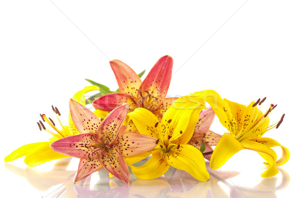 beautiful lily Stock photo © Peredniankina
