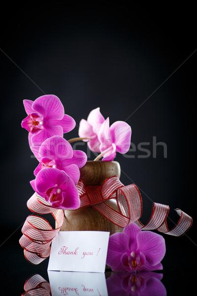 Belo ramo gratidão preto flor flores Foto stock © Peredniankina