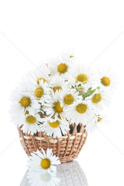 Belo buquê branco margaridas flor jardim Foto stock © Peredniankina