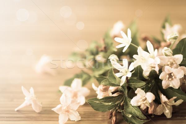 Weigel beautiful  flowers Stock photo © Peredniankina