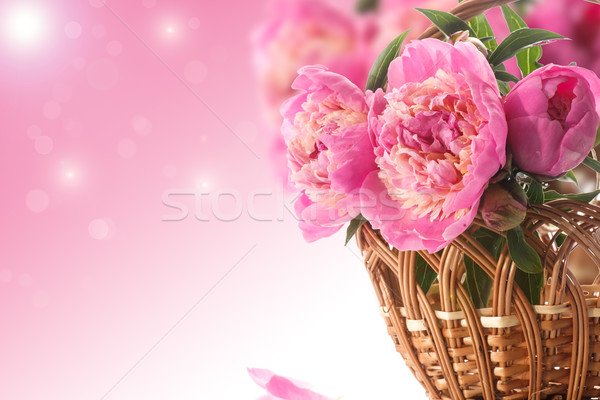 beautiful blooming peonies Stock photo © Peredniankina