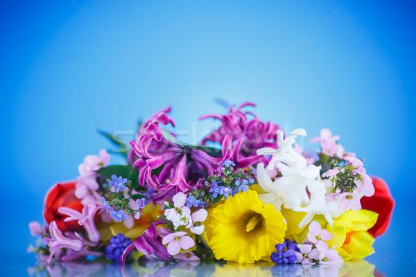 Belo buquê flores da primavera azul primavera natureza Foto stock © Peredniankina