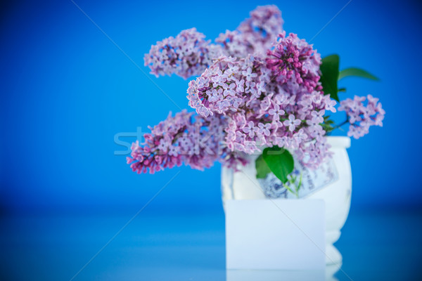 красивой весны сирень синий любви рождения Сток-фото © Peredniankina