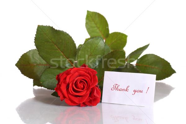 Gyönyörű piros rózsa hála fehér nő virágok Stock fotó © Peredniankina