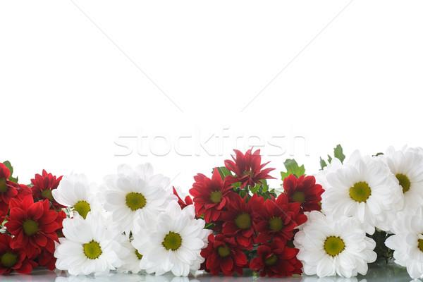 Rojo blanco primavera belleza otono regalo Foto stock © Peredniankina