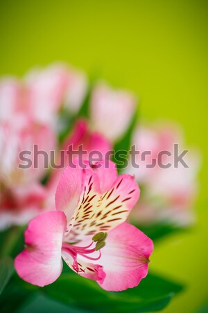 belle bouquet fleurs printemps amour soleil photo stock natalia peredniankina. Black Bedroom Furniture Sets. Home Design Ideas