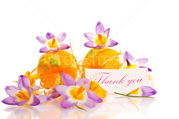 thanks and spring crocuses Stock photo © Peredniankina