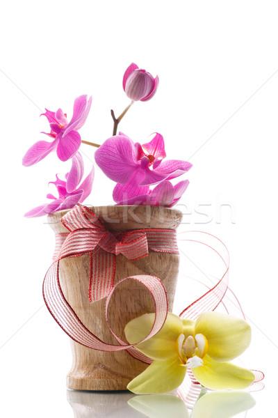 紫色 花 白 愛 自然 背景 ストックフォト © Peredniankina