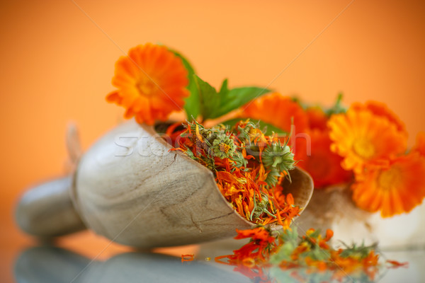 Stock fotó: Aszalt · virágok · narancs · virág · természet · egészség