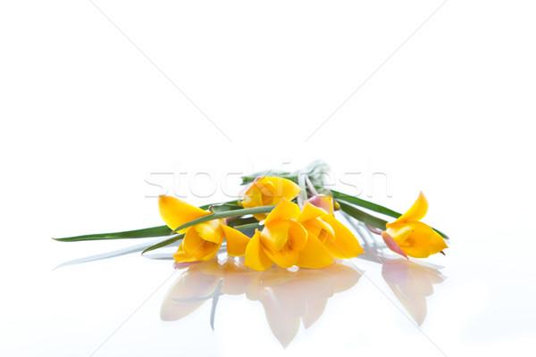 Sarı çiğdem güzel çiçekli beyaz çiçek Stok fotoğraf © Peredniankina