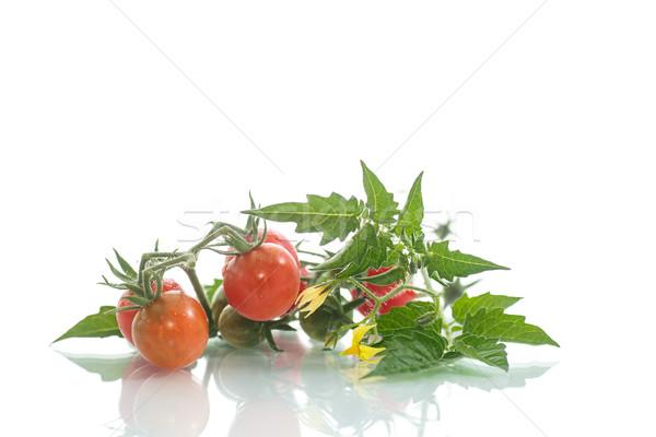 Orgánico tomates cherry blanco flor alimentos hoja Foto stock © Peredniankina