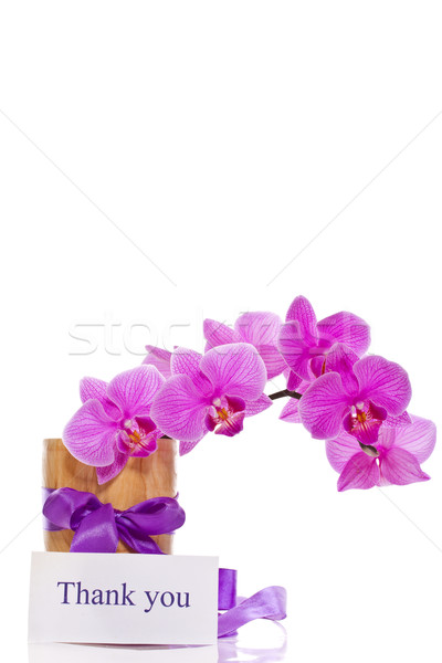 Flores vaso branco fundo mãe planta Foto stock © Peredniankina