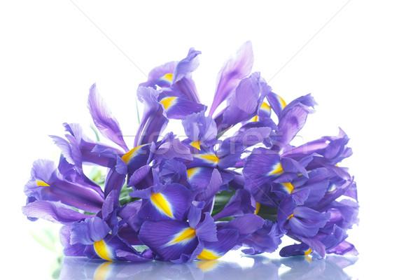 Boeket mooie bloemen bloem moeder Blauw Stockfoto © Peredniankina