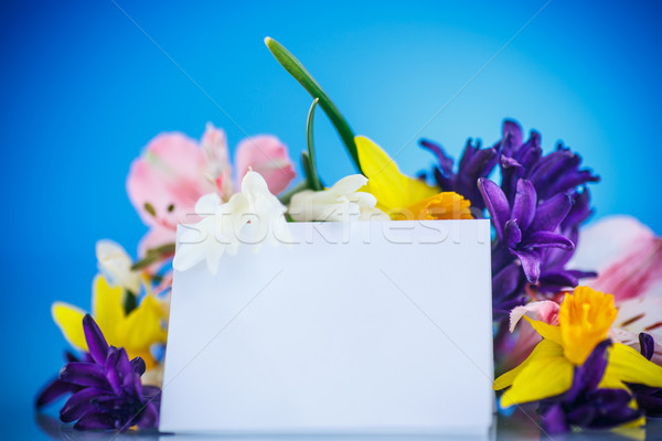 Belo buquê flores da primavera azul primavera fundo Foto stock © Peredniankina