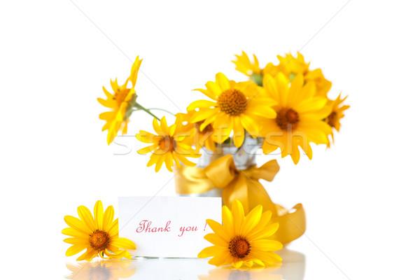 Amarillo Daisy flores blanco naturaleza Foto stock © Peredniankina