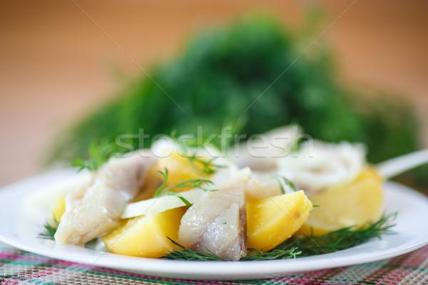 Sózott főtt krumpli vacsora fehér eszik Stock fotó © Peredniankina