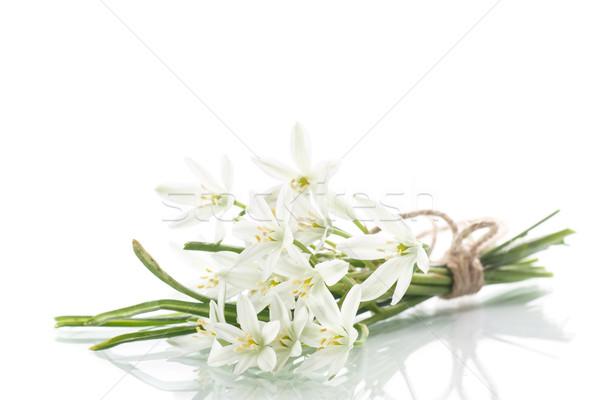 Mooie boeket witte bloemen witte bloem sneeuw Stockfoto © Peredniankina