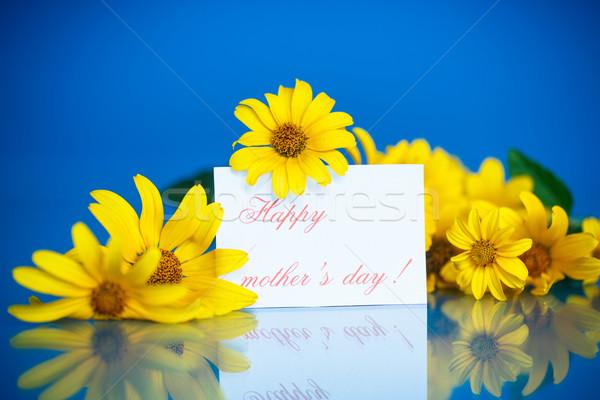 Boeket Geel madeliefjes Blauw bloem tuin Stockfoto © Peredniankina