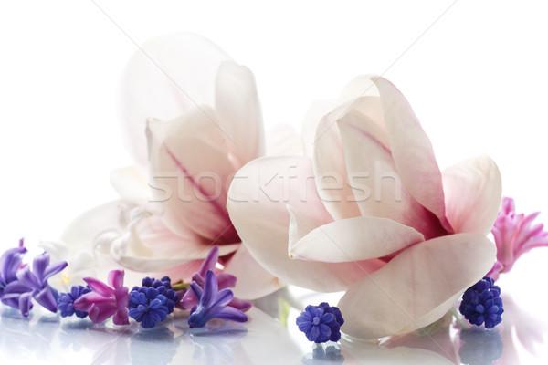 Szett tavaszi virágok magnolia fehér esküvő kert Stock fotó © Peredniankina