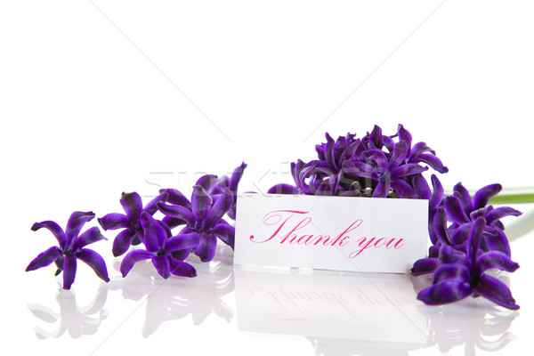 Stock photo: hyacinth flowers with gratitude