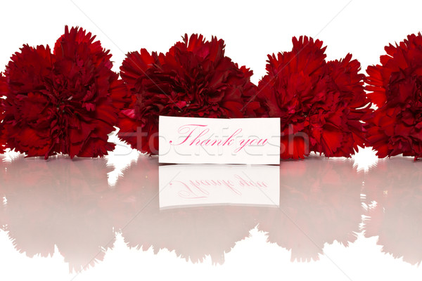 Köszönjük kártya hála virágok fehér virág Stock fotó © Peredniankina