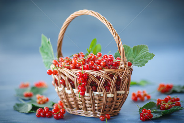 redcurrant Stock photo © Peredniankina