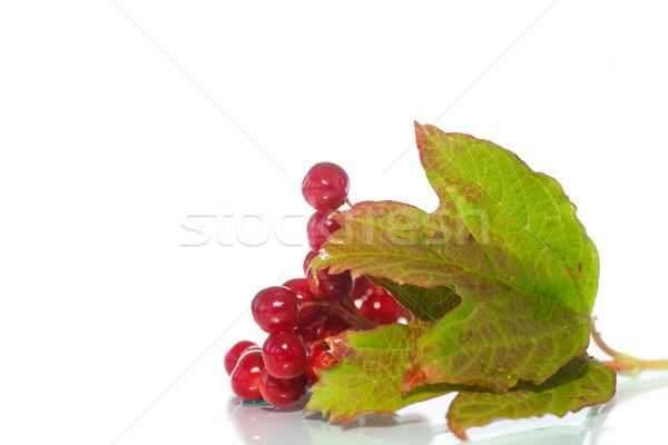 ストックフォト: 赤 · 液果類 · 支店 · 葉 · 孤立した · 白