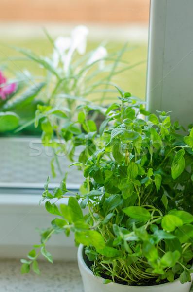 Kruiden pot home voorjaar vers vrouw Stockfoto © Peteer