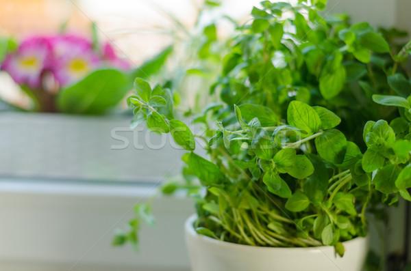 Stock fotó: Gyógynövények · edény · otthon · tavasz · friss · nő