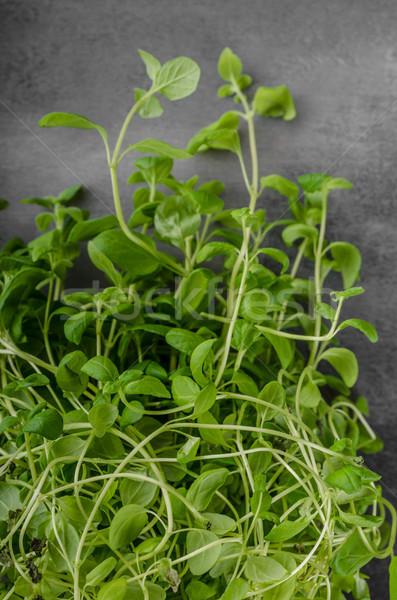Bio kruiden voedsel fotografie voorjaar natuur Stockfoto © Peteer