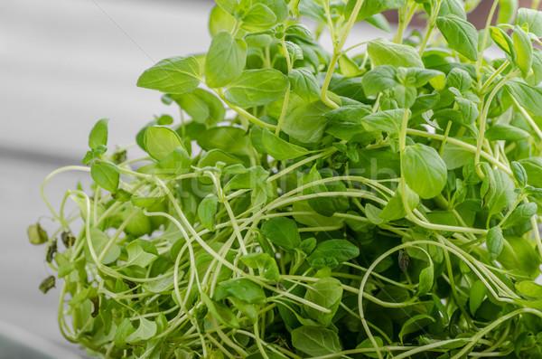Bio erbe alimentare fotografia primavera natura Foto d'archivio © Peteer