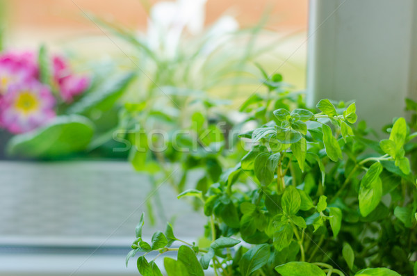 Kruiden pot home voorjaar vers venster Stockfoto © Peteer