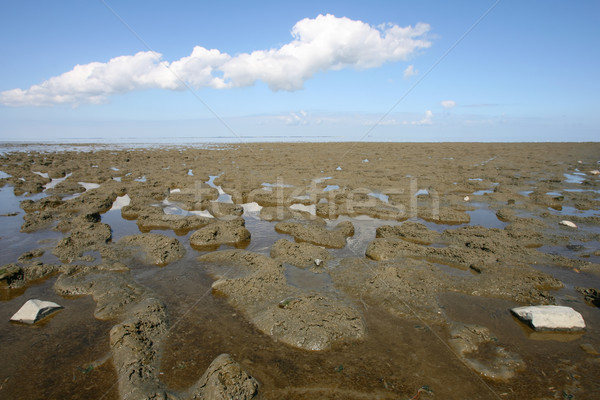 low tide at the borders of the Wadden sea Stock photo © peter_zijlstra