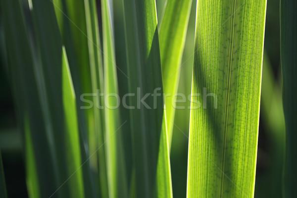 Plant bladeren textuur tuin achtergrond groene Stockfoto © peter_zijlstra