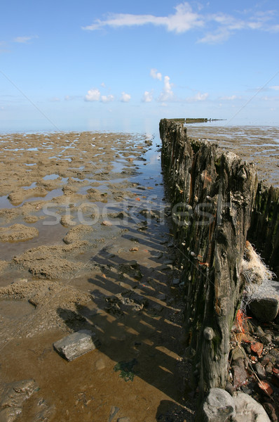 Breakwater at low tide at the borders of the Wadden sea Stock photo © peter_zijlstra