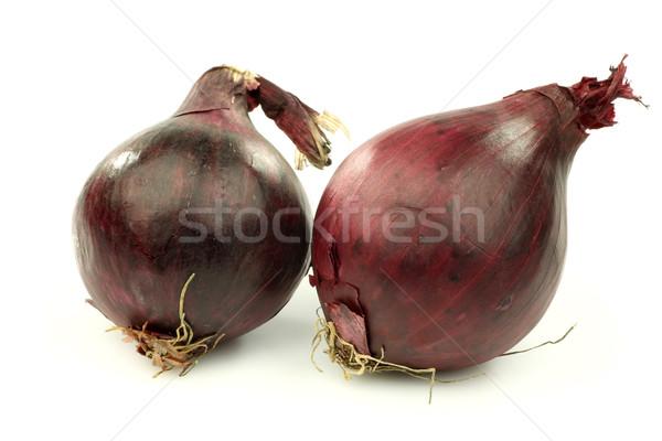 赤 玉葱 白 料理 野菜 新鮮な ストックフォト © peter_zijlstra