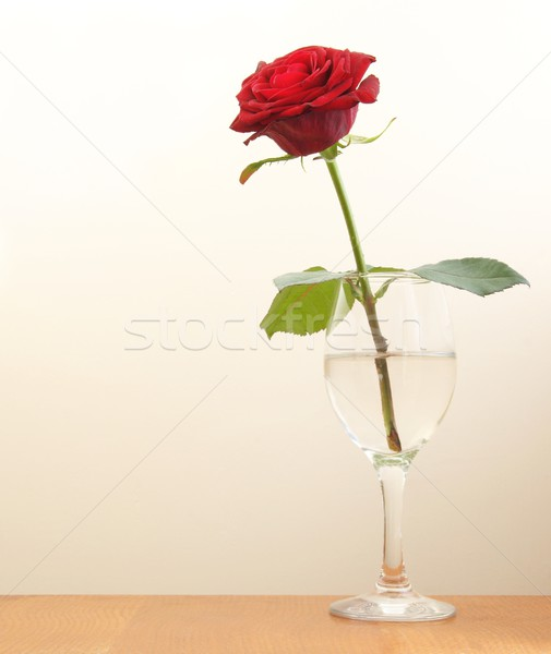 Rose Red permanent verre eau table Photo stock © peterguess