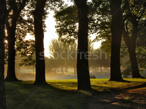 Trees At Sunrise Stock photo © peterguess