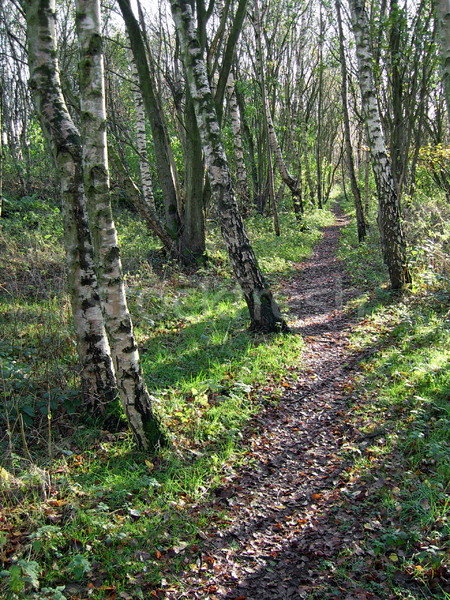 Wooded Path Stock photo © peterguess