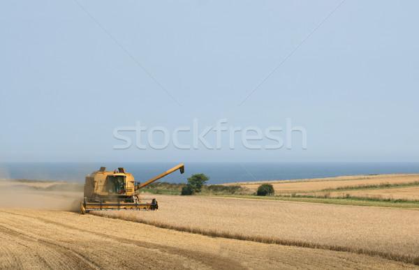 フィールド 収穫 小麦 ノーフォーク ストックフォト © peterguess
