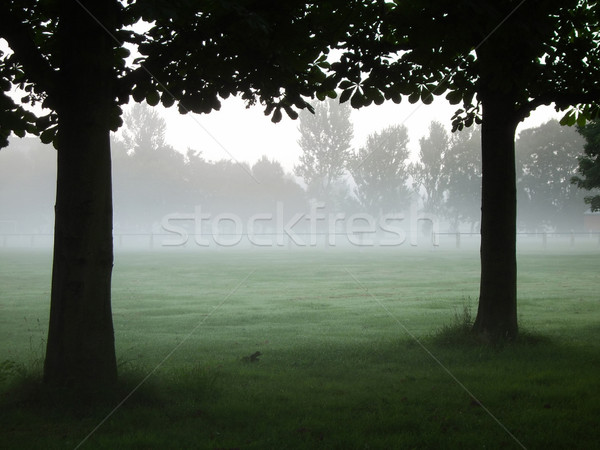Fog and Trees Stock photo © peterguess