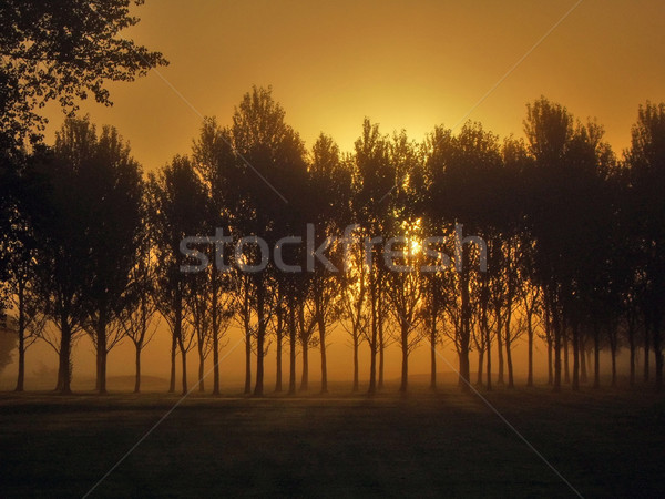 Foggy Dawn Stock photo © peterguess