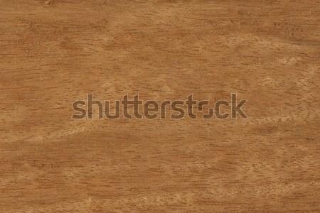 Naturelles la texture du bois réel arbre résumé wallpaper Photo stock © peterguess