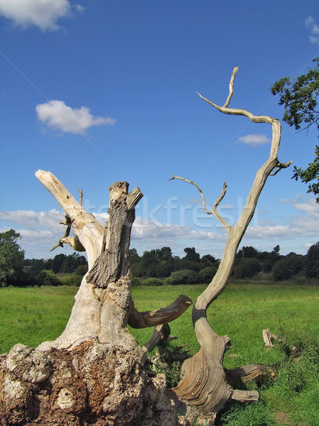 Toter Baum Bereich Holz tot Holz Zweig Stock foto © peterguess