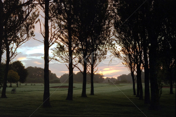 Golf Course At Dawn Stock photo © peterguess