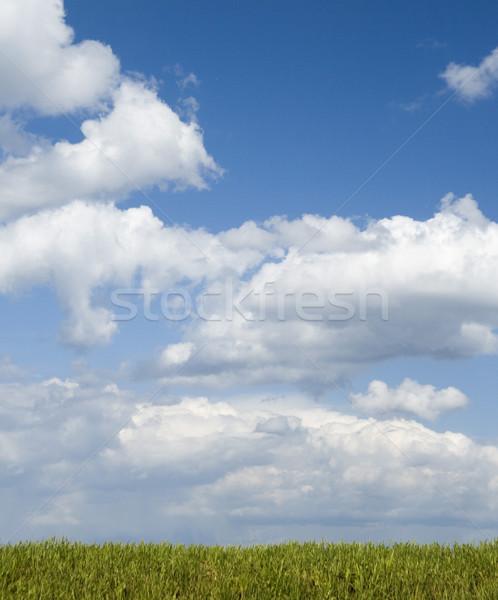 雲 草 美しい 白 フォアグラウンド 自然 ストックフォト © peterguess